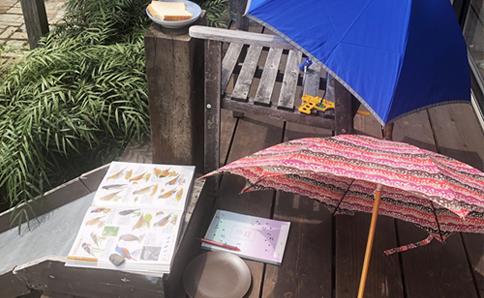 小1男子、「とりのかんさつ」中。野鳥カメラマンになりきって傘に隠れて気配を消しているそうです(よけい目立っているような…)。この日はイソヒヨドリが来ました。